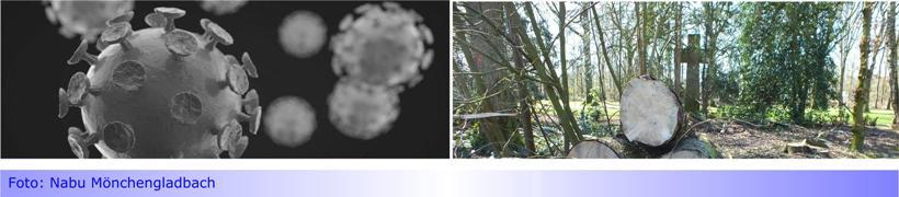 Corona und die Bäume • Nachhaltig denken und handeln! • Was kommt danach?