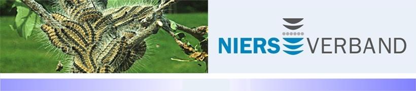 Niersverband startet vorbeugende Maßnahmen gegen Eichenprozessionsspinner