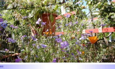 """Biodiversität im Kleingarten • Teil I: Sind Kleingärten, """"kleine Gärten"""" mit Permakultur und Förderung der Biodiversität zu vereinbaren?"""