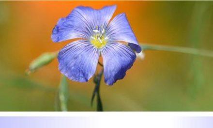Biodiversität im Kleingarten • Teil IV: Steinbeete statt Schottergärten • Lebensraum für Wildbienen und Insekten, robuste, langjährige und bunte Vielfalt in Einem!