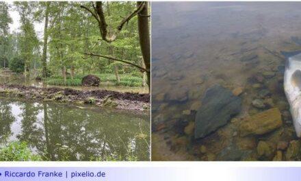 """Starkregen mit massiven Auswirkungen für die Niers: Projekt """"Bresgespark"""" vorübergehend gestoppt und Fischsterben in der Niers"""