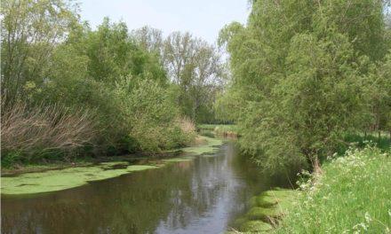 Wildbotulismus Ursache für Entensterben • Wasserqualität der Niers ist gut